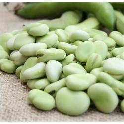 Broad Bean Aguadulce...