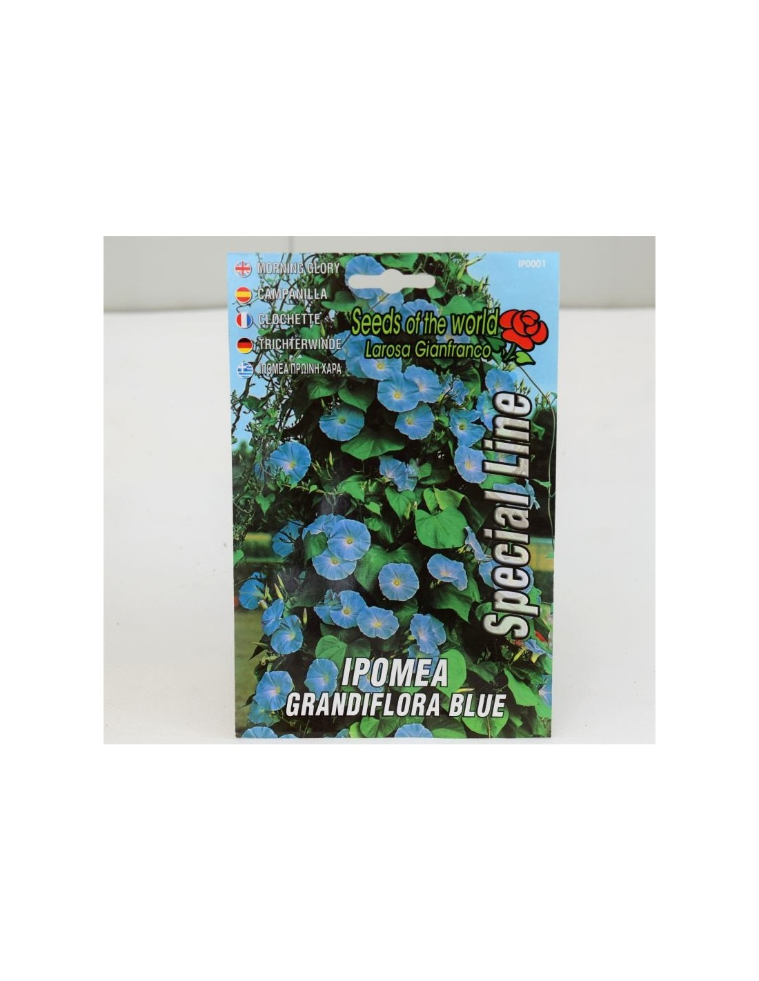 Fiori Da Giardino Roccioso climbing flowers seeds for sale-seeds online   mondo piante