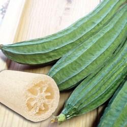 Semi Zucca Luffa