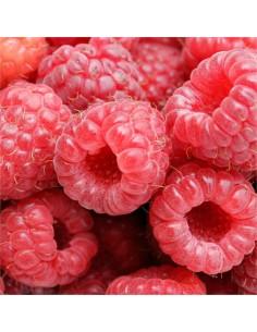 Raspberry Tree