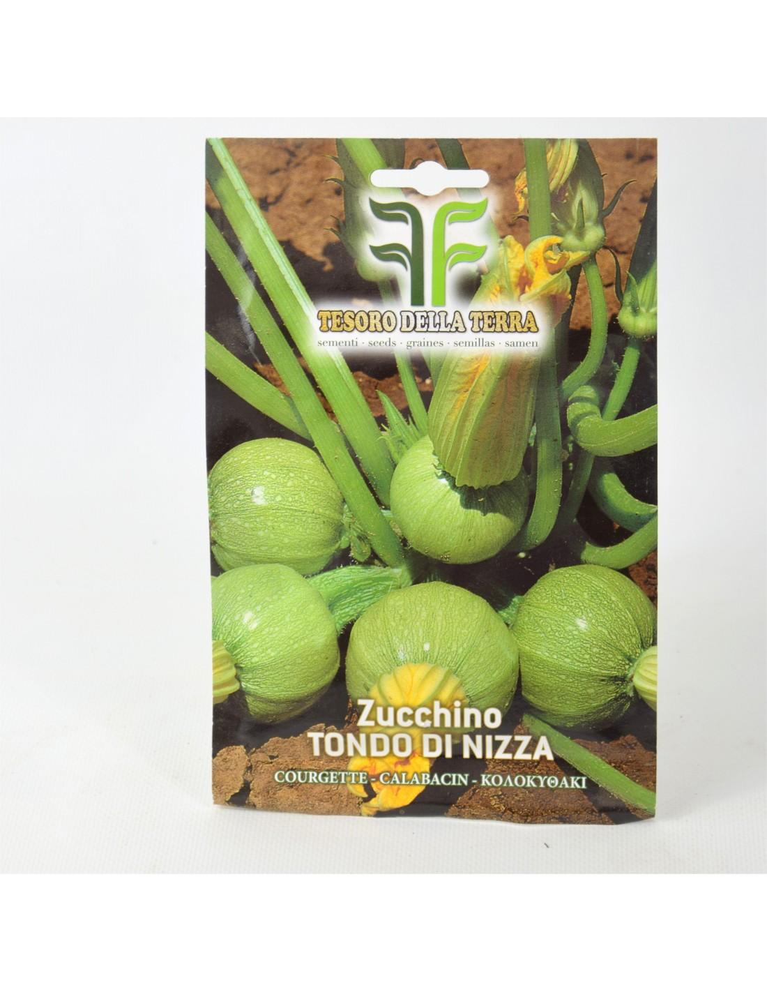 Varietà Zucchine Da Fiore vendita semi di zucchino da fiori-semi per orto online | mondo piante