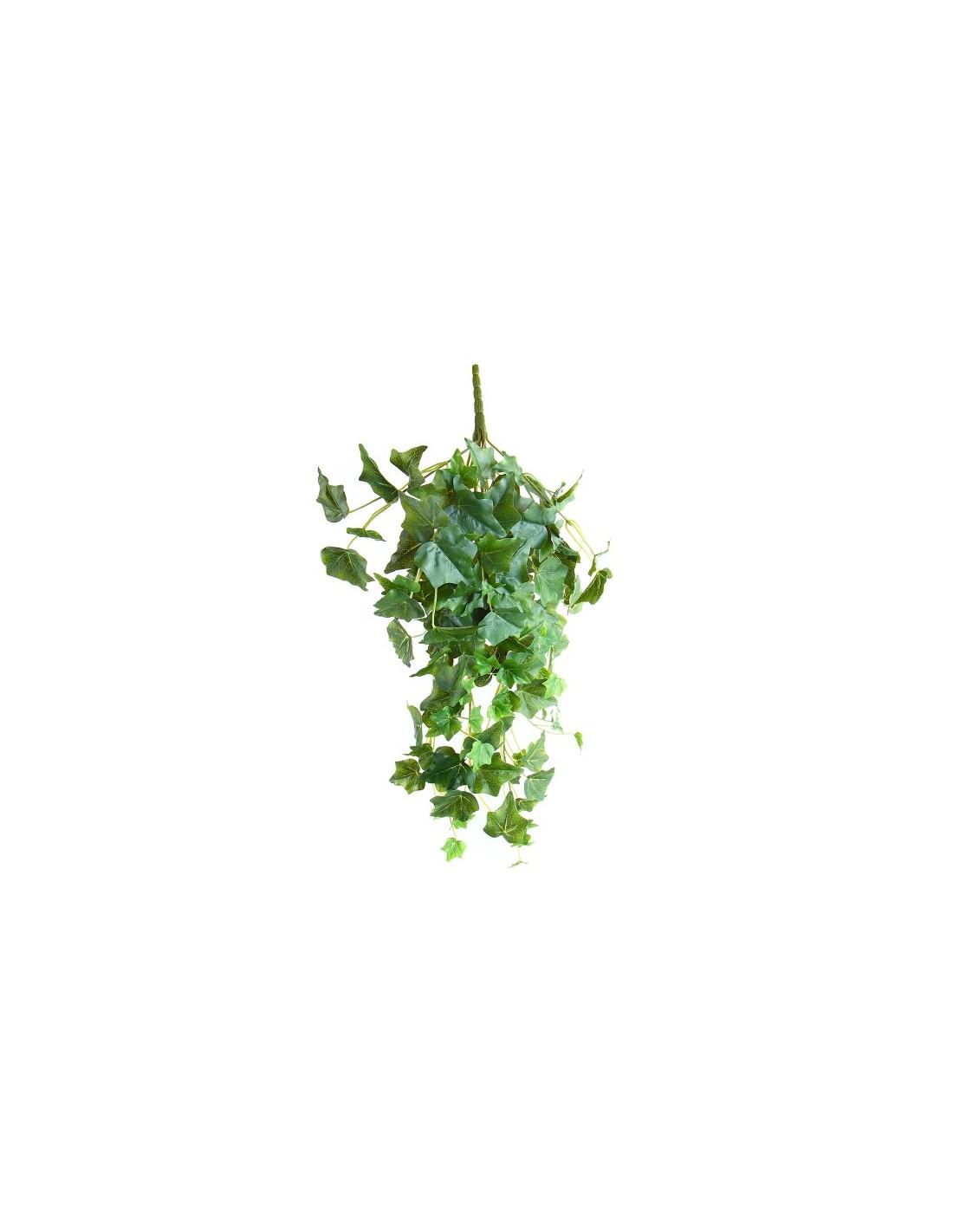 Edera Pianta Da Interno vendita pianta edera pendente - piante rampicanti | mondo piante