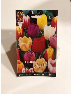 Bulbi di Tulipano (10 bulbi)