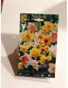 Bulbi di Narciso (5 bulbi)
