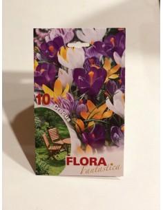 copy of Dimorfoteca Seeds