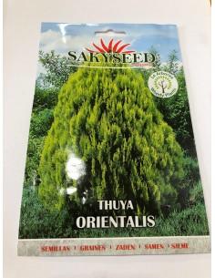 copy of Carpinus Betulus Seeds