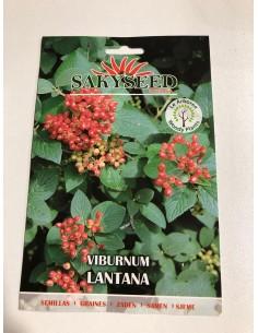 Semi di Viburnum Lantana