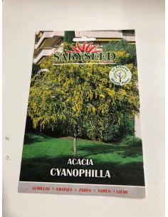 Semi di Acacia cyanophylla