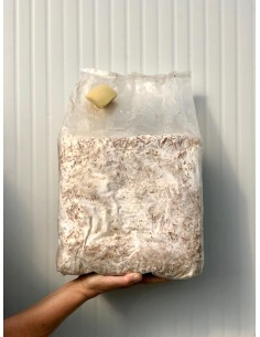 Pane di Funghi Cardoncelli