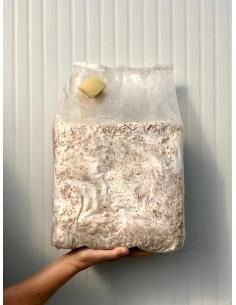 Pane di Funghi Pioppini da 3Kg