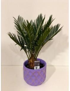 Cycas plant, Ceramic vase...