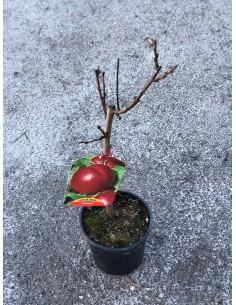 copy of Peach Tree Nectarine