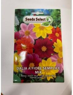 Semi di Dalia a fiore...