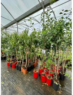 copy of 10 Fruit trees of...