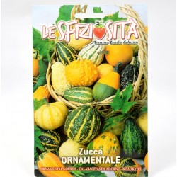 Ornamental Pumpkin Seeds