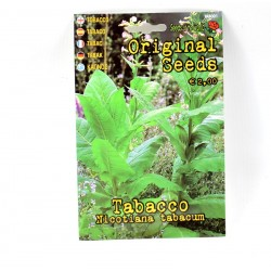 Tobacco Plant Seeds