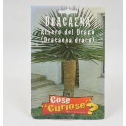Dracaena Draco Plant Seeds