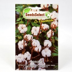 Cotton Plant Seeds