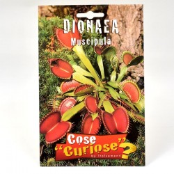 Dionea Carnivorous Plant Seeds