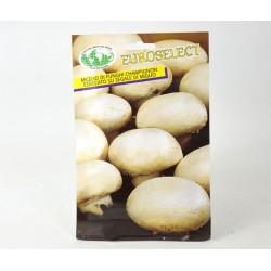 Semi Funghi Champignon
