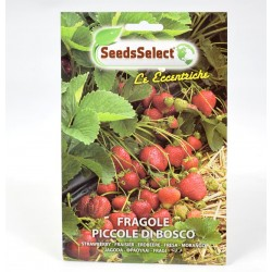 Small Wild Strawberries Seeds