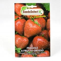 Large Strawberries Seeds