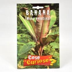 Semi Banano
