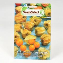 Alchechengi Seeds