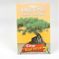 Semi Bonsai Di Pino