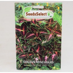 Rainbow Coleus Seeds