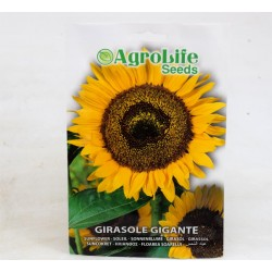 Giant Sunflower Seeds