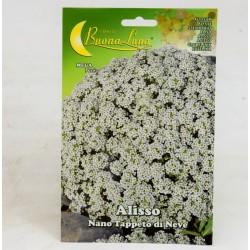 White Alisso Seeds