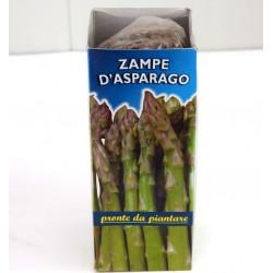 Asparagus Legs