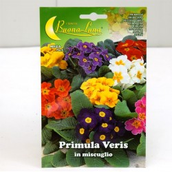 Primula Seeds