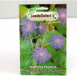 Semi Mimosa Pudica