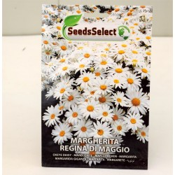 Seeds of Giant Daisy
