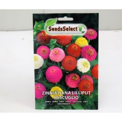 Zinnia Lilliput Seeds
