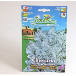 Cineraria Seeds