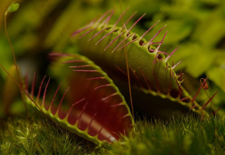 Carnivorous plants | Mondo Piante